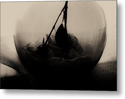 The Inverted Rose Metal Print by Jessica Shelton