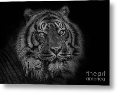 The Last Indonesian Metal Print by Ashley Vincent