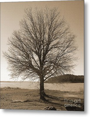 The Last Oak Metal Print by R McLellan
