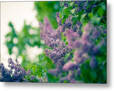 The Lilac Metal Print by Andreas Levi
