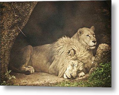 The Lion Sleeps Tonight Metal Print by Trish Tritz