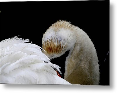 The Look Metal Print by Terry Cosgrave