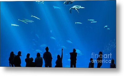 The Magnificent Open Sea Exhibit At The Monterey Bay Aquarium. Metal Print by Jamie Pham