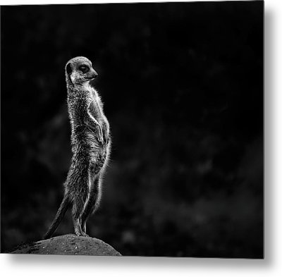 The Meerkat Metal Print by Greetje Van Son