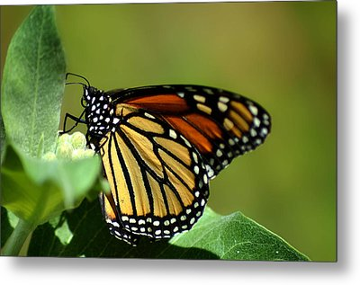 The Monarch Metal Print by Camille Lopez