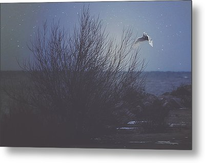 The Owl Metal Print by Carrie Ann Grippo-Pike
