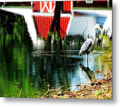 The Pelican Brief Stop Metal Print by Tina M Wenger