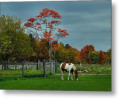 The Pinto Metal Print by Julie Dant