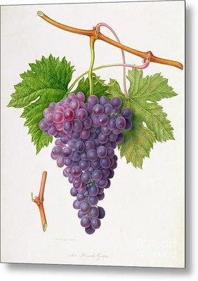 The Poonah Grape Metal Print by William Hooker