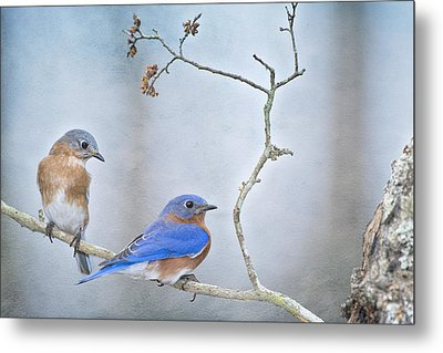 The Presence Of Bluebirds Metal Print by Bonnie Barry