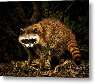 The Raccoon 20150211brun Metal Print by Wingsdomain Art and Photography