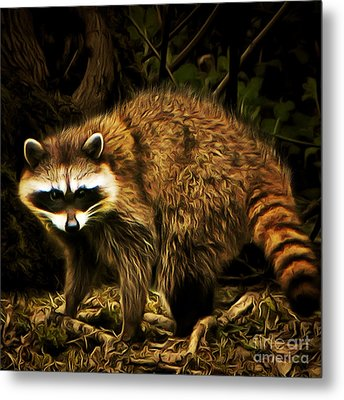 The Raccoon 20150215brun Square Metal Print by Wingsdomain Art and Photography