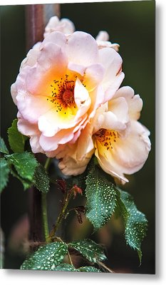 The Rose With Your Name. Park Of De Haar Castle Metal Print by Jenny Rainbow