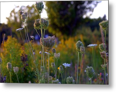 The Sound Of Wild Carrots Metal Print by Glenn Curtis