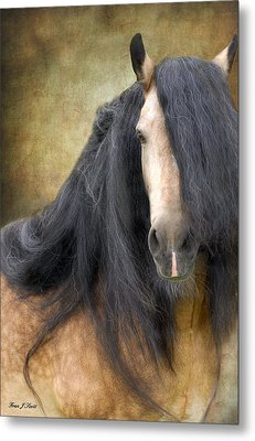 The Stallion Metal Print by Fran J Scott