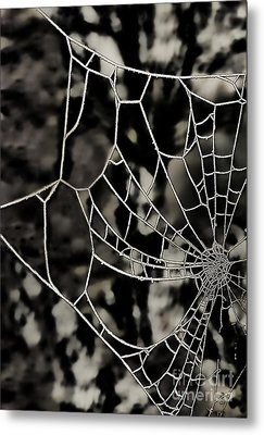 The Tangled Web Metal Print by Sheila Laurens