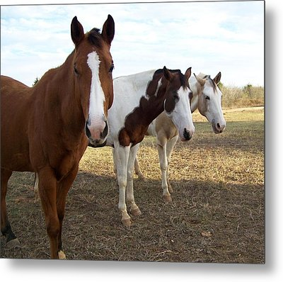 The Three Amigos Metal Print by Cherie Haines