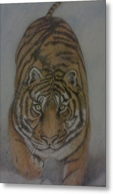 The Tiger Metal Print by Christy Saunders Church
