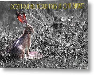 The Tortoise And The Hare Dont Put All Your Eggs In One Basket 40d12379 Bw Metal Print by Wingsdomain Art and Photography