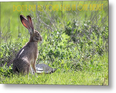 The Tortoise And The Hare Dont Put All Your Eggs In One Basket 40d12379 Metal Print by Wingsdomain Art and Photography