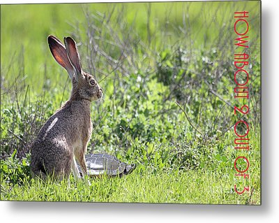 The Tortoise And The Hare How About Two Out Of Three 40d12379 Metal Print by Wingsdomain Art and Photography