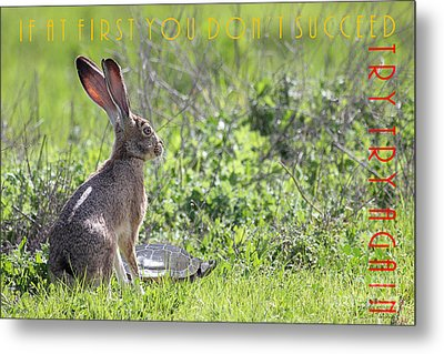 The Tortoise And The Hare Try Try Again 40d12379 Metal Print by Wingsdomain Art and Photography
