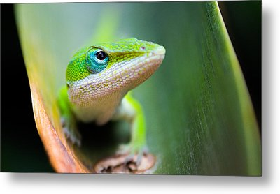 The Watching Eye Metal Print by Shelby  Young