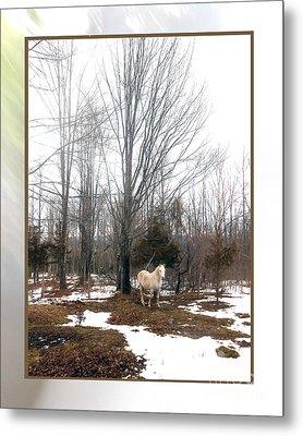 The White Stallion On A Snowless  Mound Metal Print by Patricia Keller