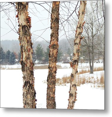The Woods Number Two Metal Print by Todd Sherlock