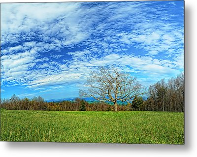 The Zen Meadow Metal Print by Metro DC Photography