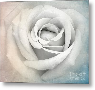 This Or That Metal Print by Sabrina L Ryan