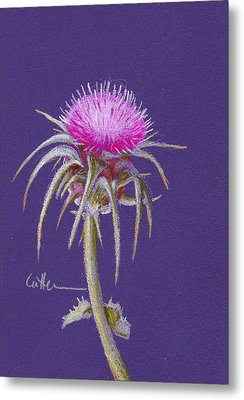 Thistle Metal Print by Diane Cutter