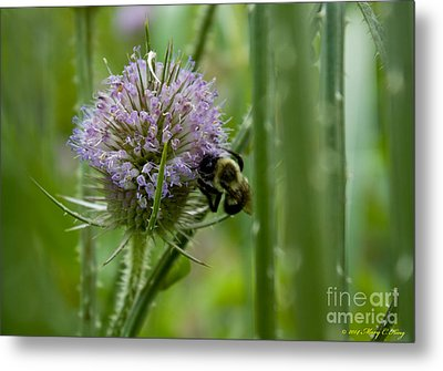 Thistle Forest Metal Print by Mary  King