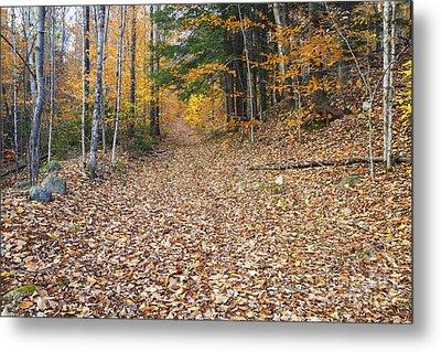 Thornton Gore Road - Thornton New Hampshire Metal Print by Erin Paul Donovan