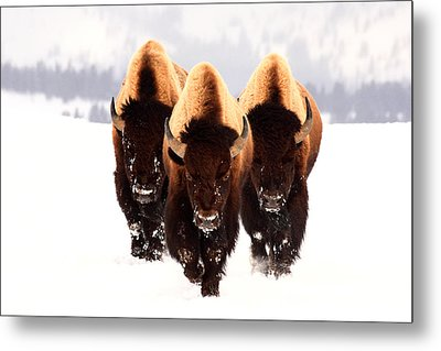 Three Amigos Metal Print by Steve Hinch