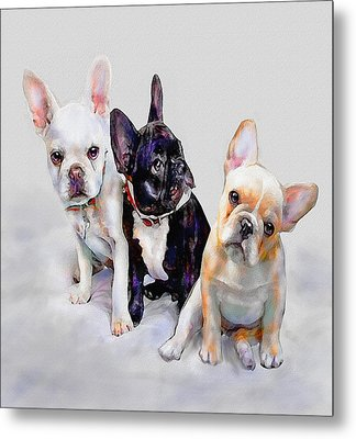 Three Frenchie Puppies Metal Print by Jane Schnetlage