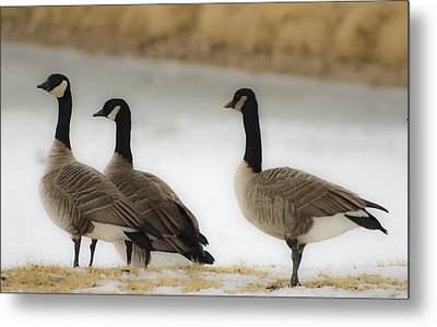 Three Geese Abstract Metal Print by Dave Dilli