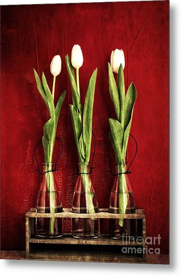 Three White Tulips Floral Metal Print by Edward Fielding