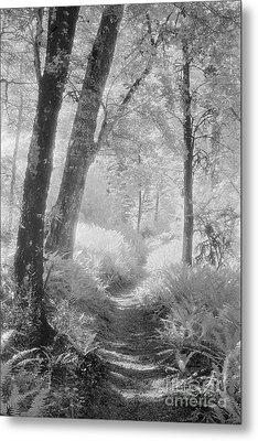 Through The Bush Metal Print by Colin and Linda McKie