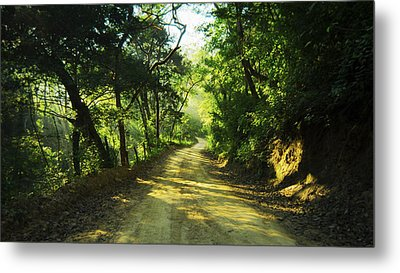 Through The Jungle Metal Print by Aged Pixel