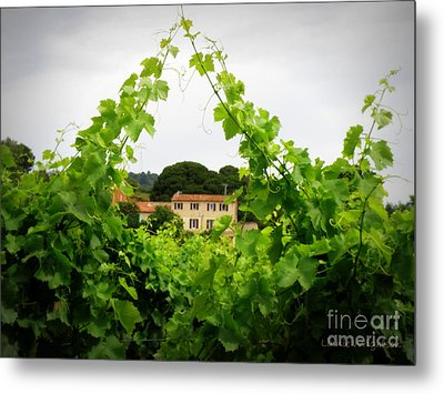 Through The Vines Metal Print by Lainie Wrightson