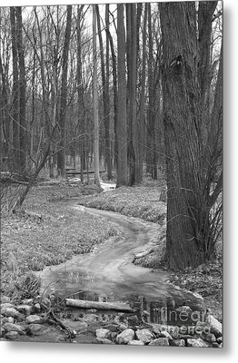 Through The Woods Metal Print by Sara  Raber