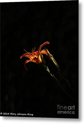 Tiger Lily On Black Metal Print by Mary  King