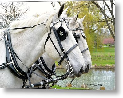 Tillie And Bruce #2 Metal Print by Jeannie Rhode Photography