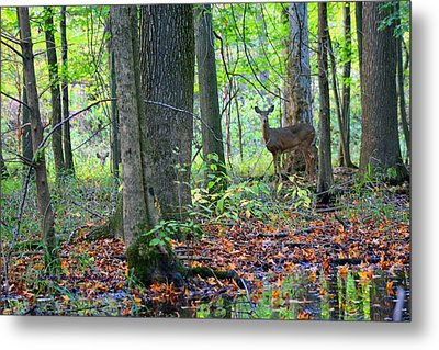 Time Alone With God Metal Print by Lorna Rogers Photography