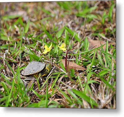 Tiny Turtle Metal Print by Al Powell Photography USA