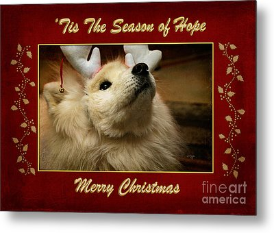 'tis The Season Of Hope Merry Christmas Metal Print by Lois Bryan