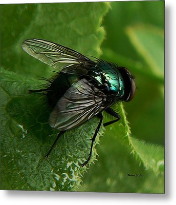 To Be The Fly On The Salad Greens Metal Print by Barbara St Jean