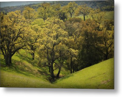 To Comfort You Metal Print by Laurie Search