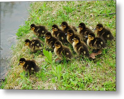 Traffic Jam Metal Print by Frozen in Time Fine Art Photography